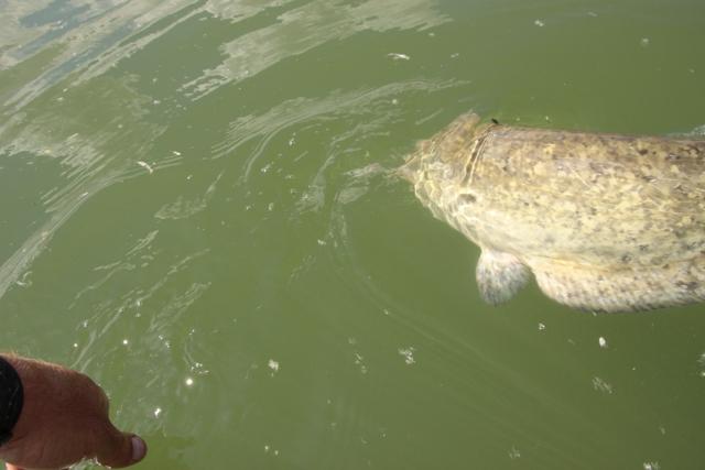 3 après-midi de pêche Img_4220