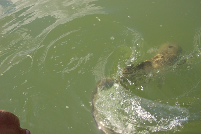 3 après-midi de pêche Img_4221