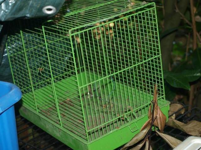 Cages toutes sortes à vendre (41, centre, rp) AJOUTS!!! 14882510