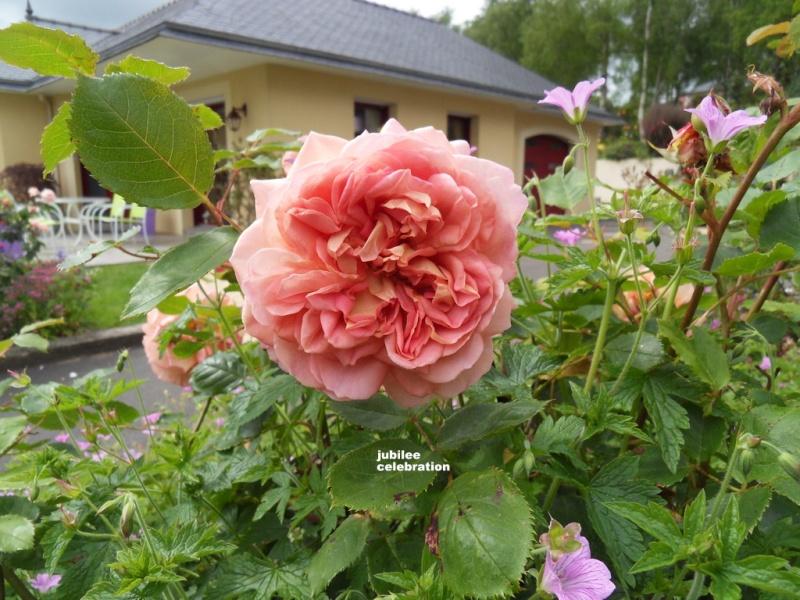 le royaume des rosiers...Vive la Rose ! - Page 13 013-sd10