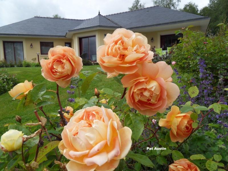 le royaume des rosiers...Vive la Rose ! - Page 13 022-sd10