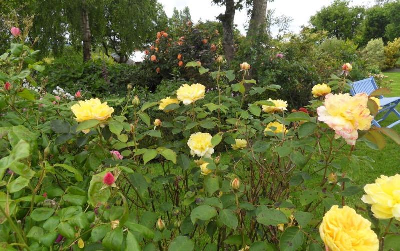 le royaume des rosiers...Vive la Rose ! - Page 13 10-sdc11