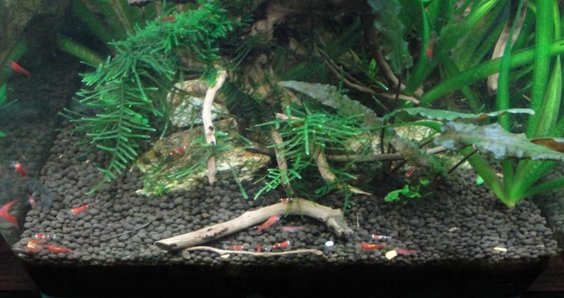 Photos de nos petits bacs d'eau douce Bac_nc11