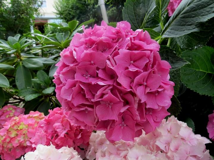 les fleurs dans mon jardin mars,avril 2014 Img_2015