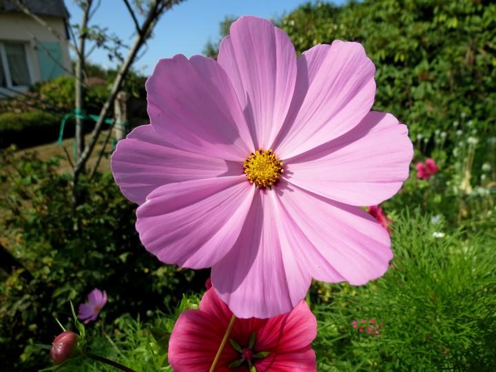 fleurs rapportées de bretagne Img_2418