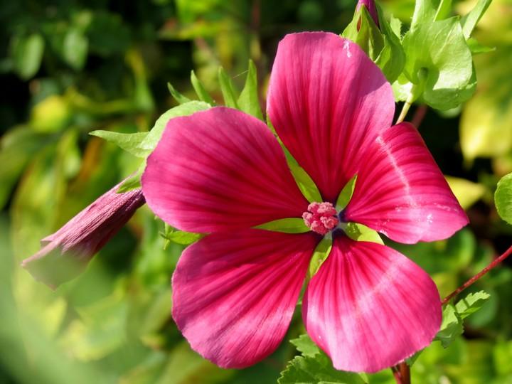 fleurs rapportées de bretagne Img_2420