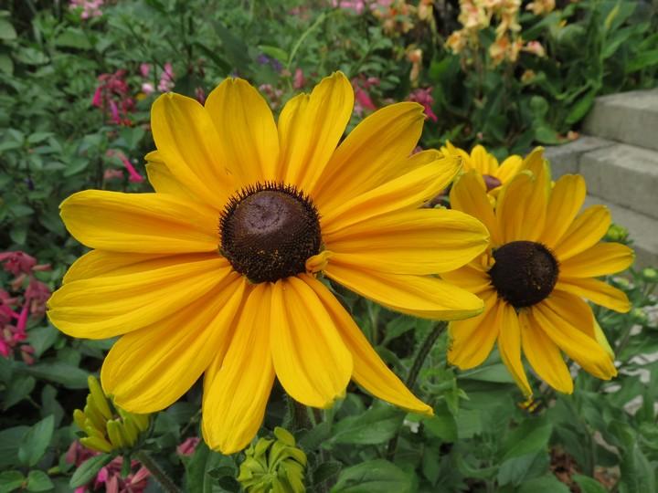 fleurs rapportées de bretagne Img_2613