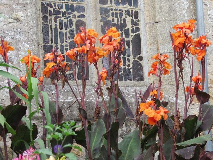 fleurs rapportées de bretagne Img_2714