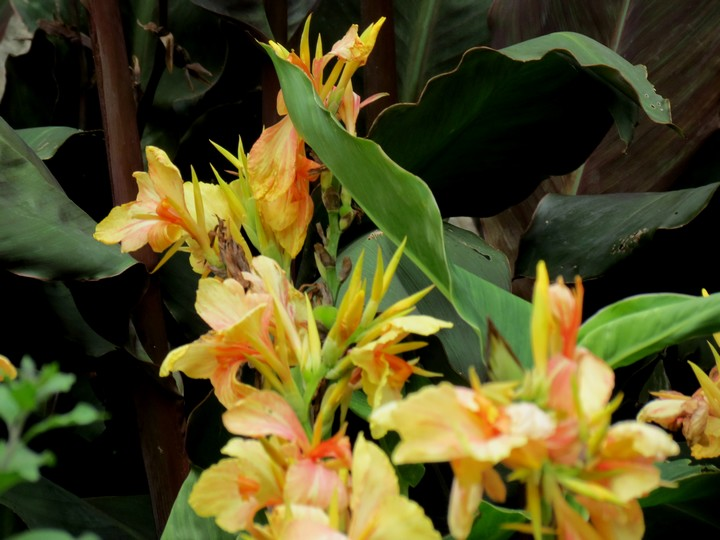 fleurs rapportées de bretagne Img_2715