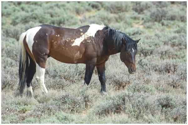 Mustang 1 - à vous de choisir son nom Mustan10