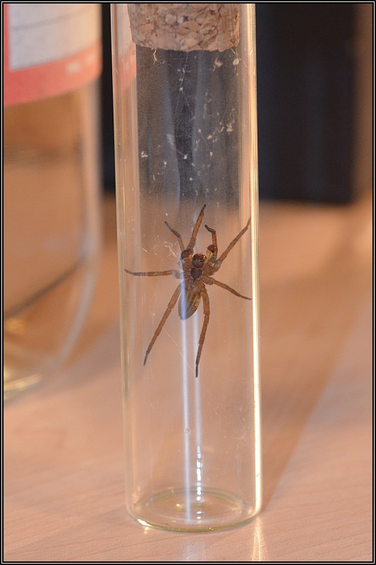 Découverte des araignées Dolome12
