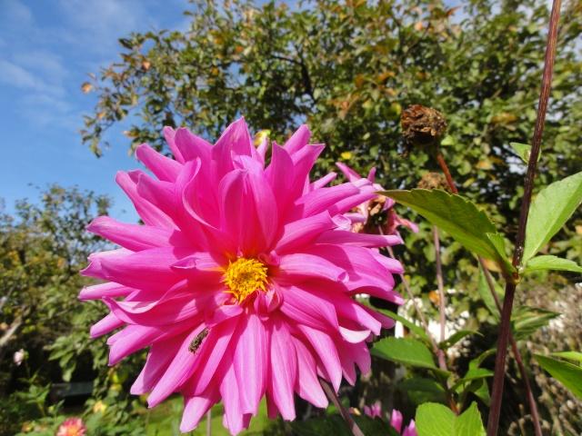 Les fleurs de nos jardins Dsc09711