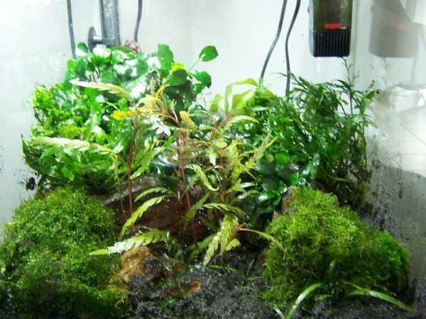 mon nano moss (réfection le 30 10 14 )  - Page 2 Nano_n10