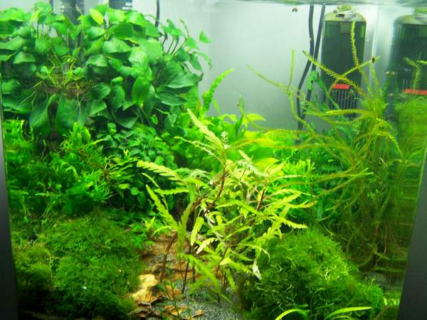 mon nano moss (réfection le 30 10 14 )  - Page 2 Nano_n11