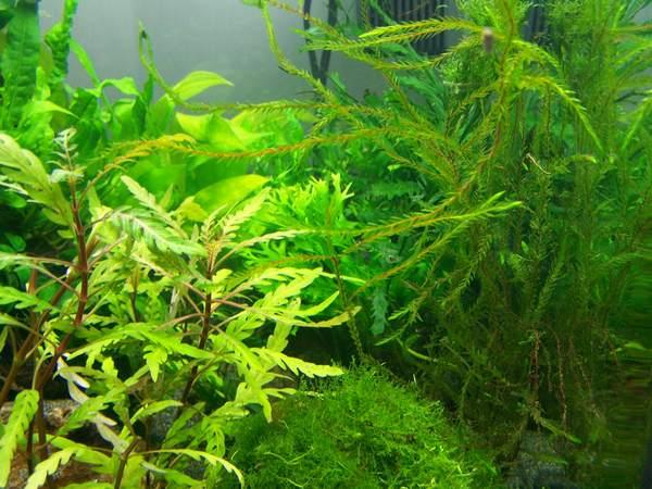 mon nano moss (réfection le 30 10 14 )  - Page 2 Nano_n13