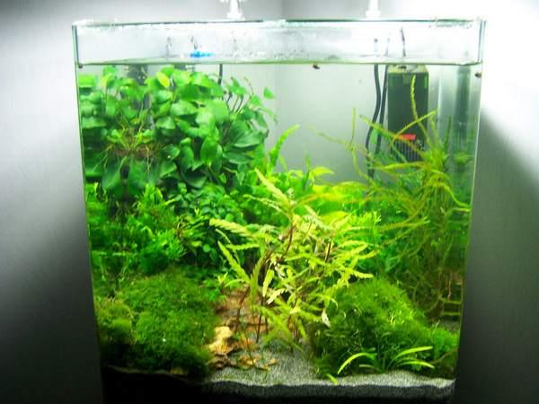 mon nano moss (réfection le 30 10 14 )  - Page 2 Nano_n14