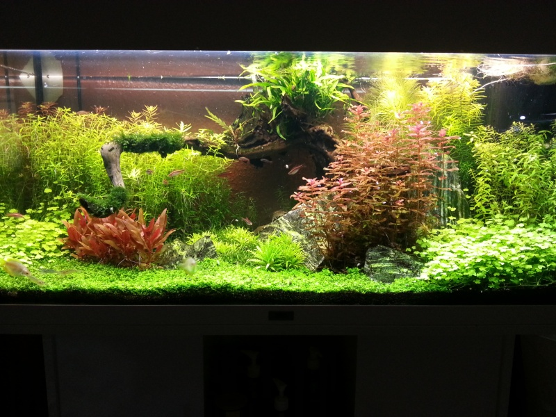 Mon Rio 180 litres, futur aquarium communautaire - Page 3 20130711
