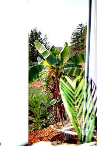 41 - Le jardin vu d'une fenêtre... le vote 00310110