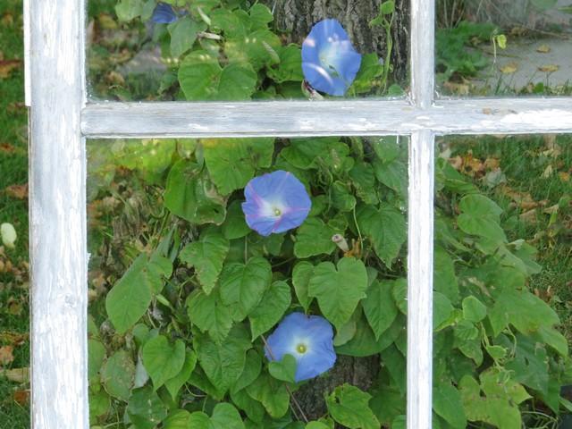 41 - Le jardin vu d'une fenêtre... le vote 004a1010