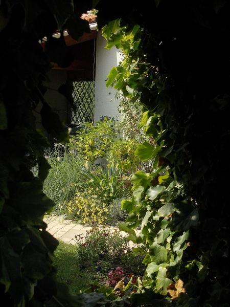 41 - Le jardin vu d'une fenêtre... le vote Dscn9010