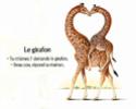 Grand Prix de l'Illustration 97823611