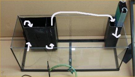 Premier aquarium de 100L, Corydoras Panda + Platys Decant11