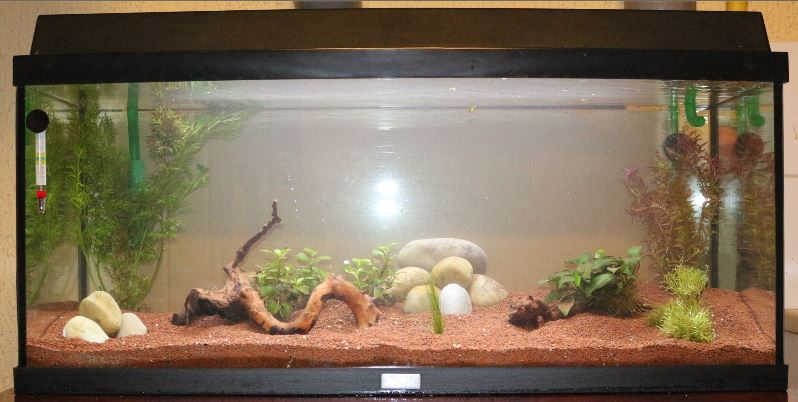 Premier aquarium de 100L, Corydoras Panda + Platys Img_3910
