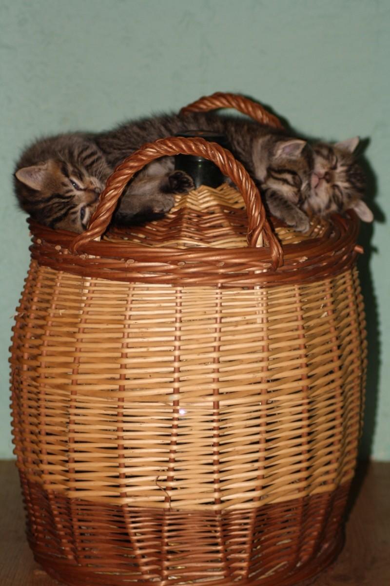 DONNE chatons 2 femelles et 1 mâle Img_1810