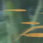 Coquillages et Crustacés [PV Genjirō] Sunash11