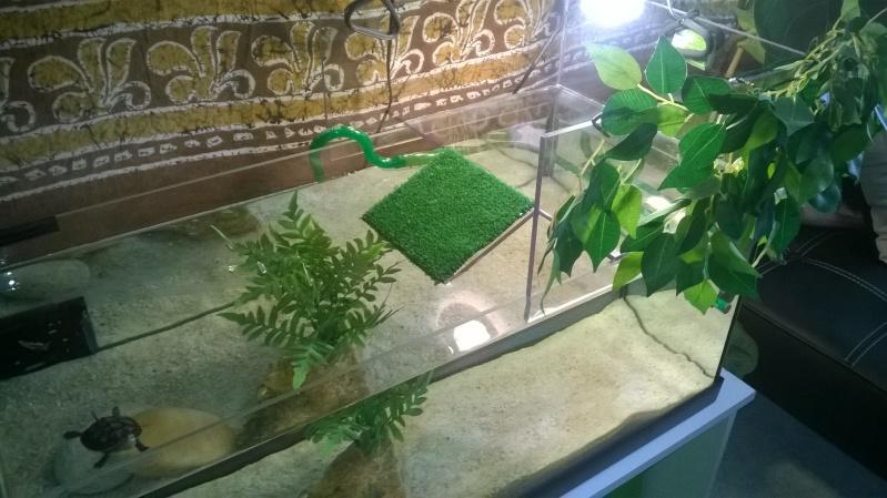 Nouvel aquarium en cours d'installation  - Page 2 Wp_20110