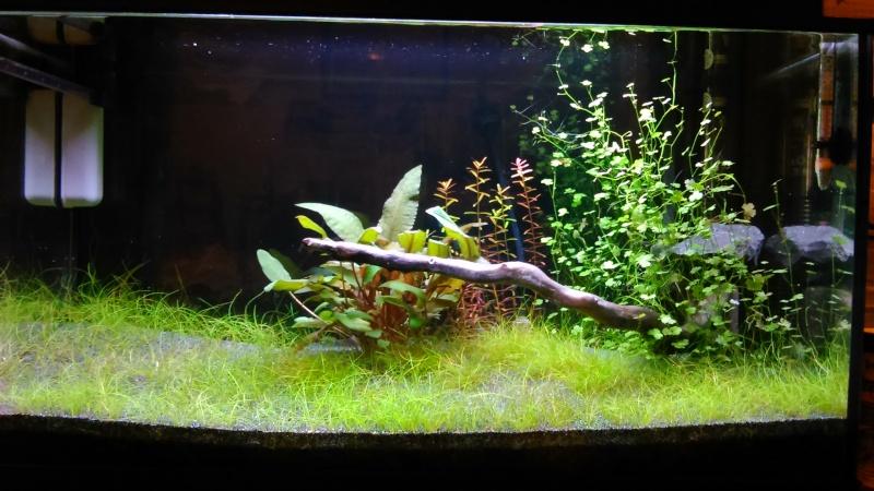 mon petit aquarium Dsc_0524