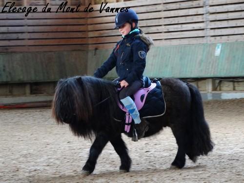 Monter un poney de 88 cm ?  Dsc00310