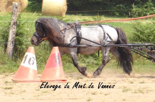 Monter un poney de 88 cm ?  Dsc07311