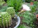 amateurs de cactus et plantes ?  - Page 20 Img_1111