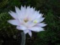amateurs de cactus et plantes ?  - Page 20 Img_1112