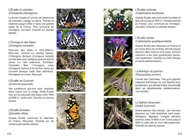 Papillons de France -NOUVEAU- 97829516