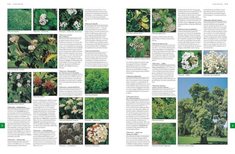 Botanica 97838411
