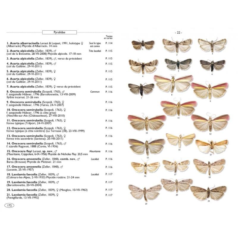 Papillons de nuit d'Europe (NAP Editions) - NOUVEAU - Papill13