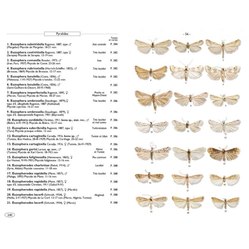 Papillons de nuit d'Europe (NAP Editions) - NOUVEAU - Papill15