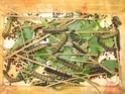 Antherina suraka (Boisduval, 1883) 16_ant12