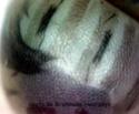 Brahmaea hearseyi White 3_brah10
