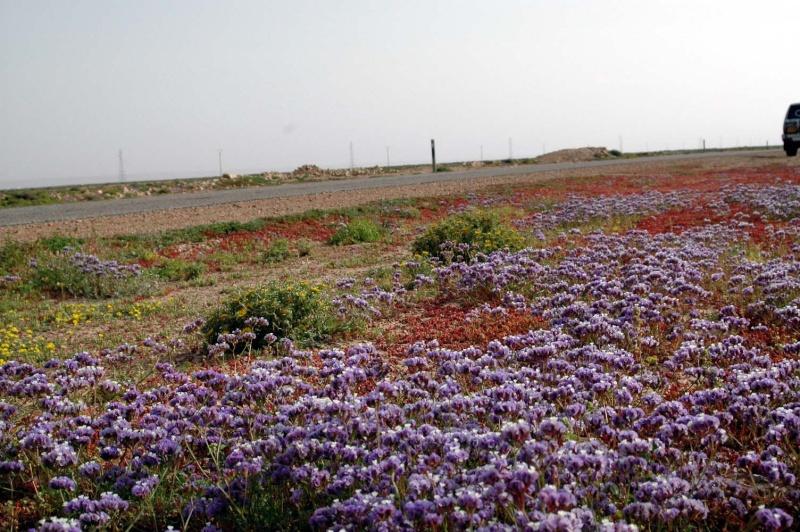 Bonne année;Le Sahara nouveau est arrivé ...photos Dsc_0010