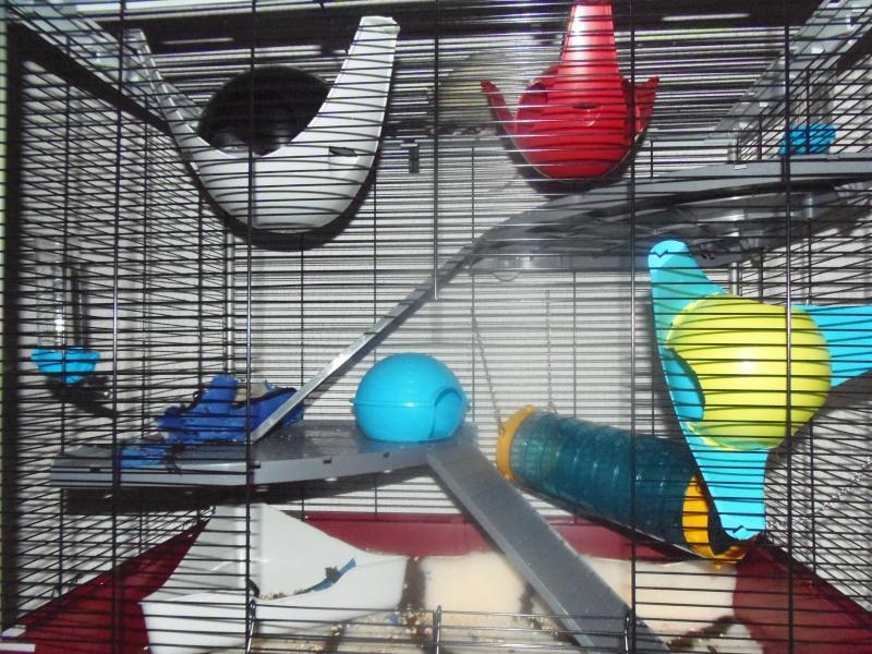 Photos de vos cages - Page 2 P1010912