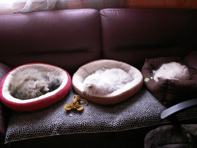 La sieste !!!!!!!!!!! Pict0110