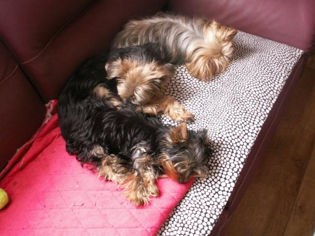 La sieste !!!!!!!!!!! Pict0211