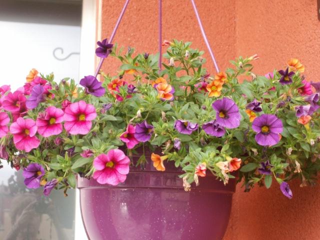 Quelques fleurs chez moi Pict0911