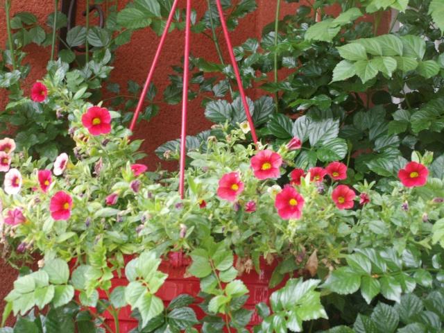 Quelques fleurs chez moi Pict0913