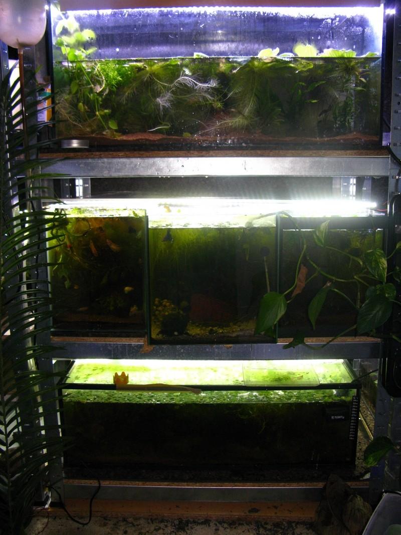 ma nouvelle fishroom - Page 2 Fishro10