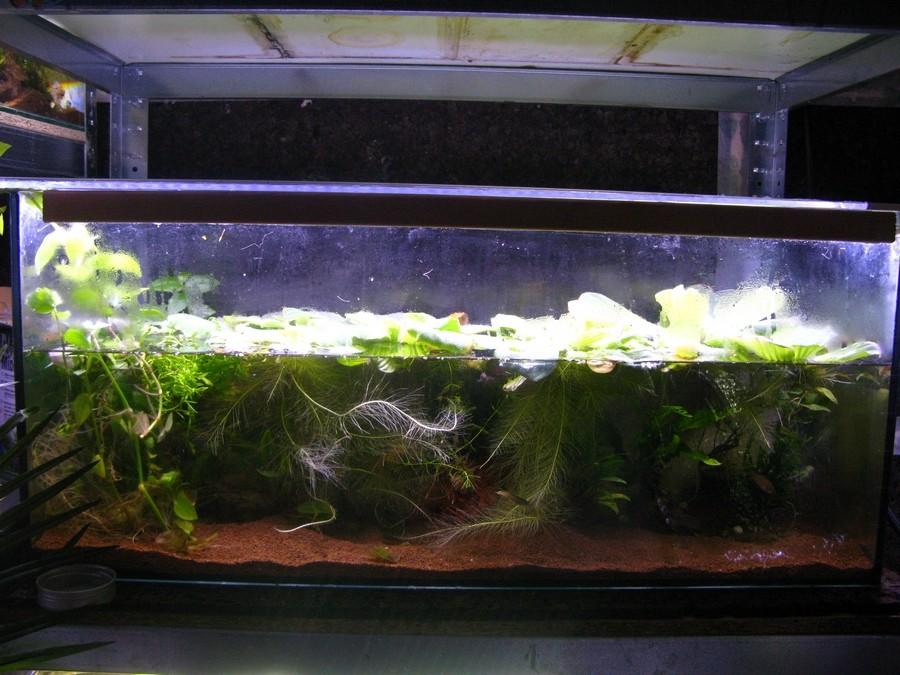 ma nouvelle fishroom - Page 2 Fishro11