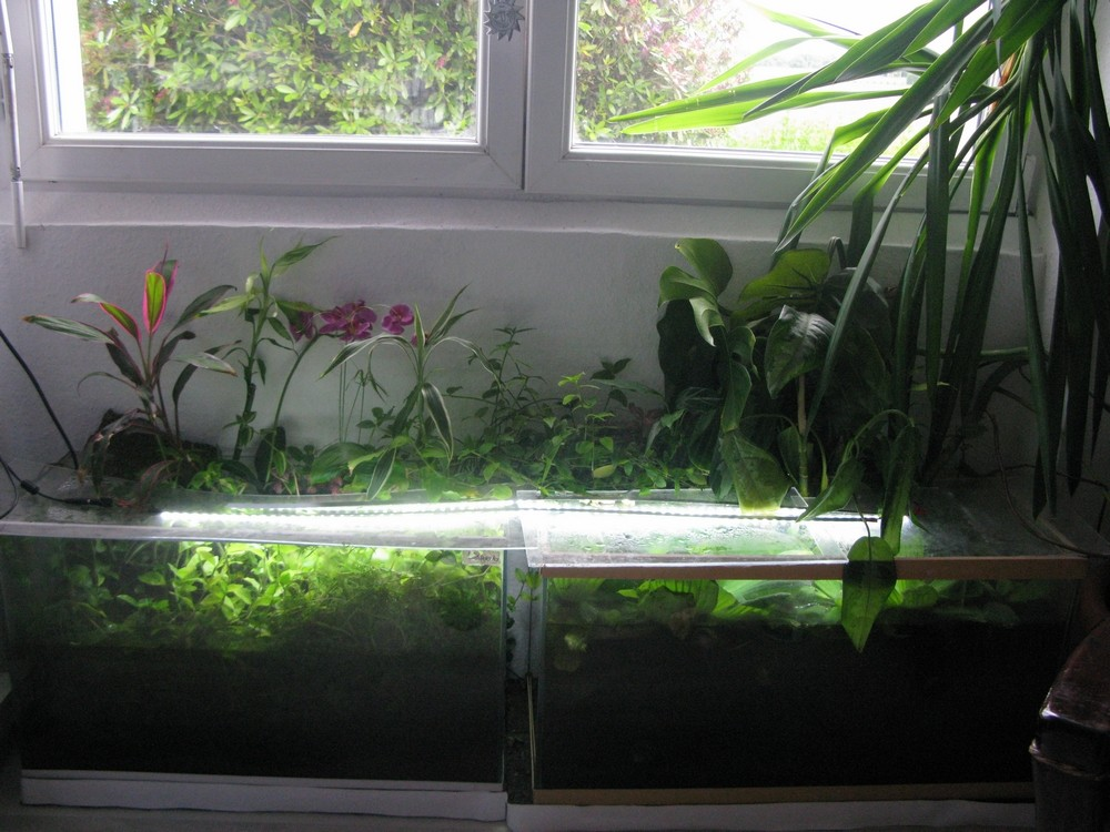 ma nouvelle fishroom - Page 2 Fishro13